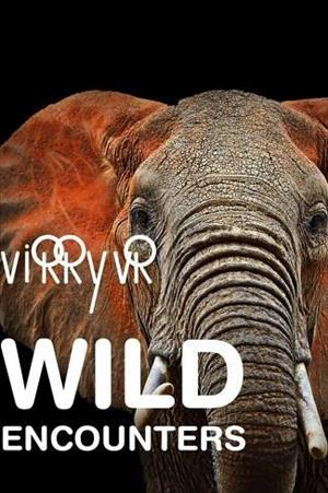 Virry VR: Wild Encounters cover art