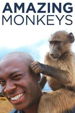 Amazing Monkeys Season 1 cover art