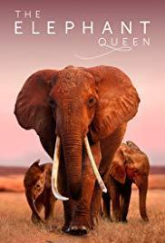 The Elephant Queen cover art