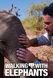 Walking with Elephants cover art